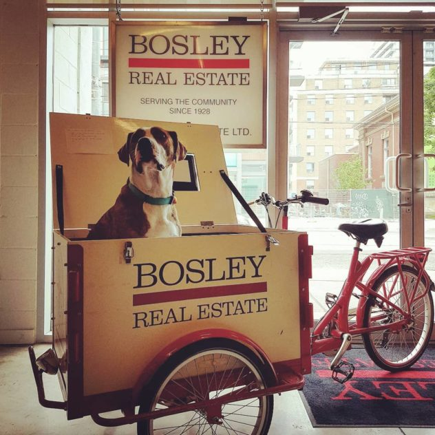 Dog in an marketing bike branded for Bosley Real Estate parked in an office